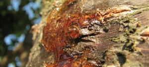Jak vyčistit skvrny od lesní pryskyřice (smůly)?