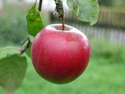 Jak vyčistit skvrny od ovoce (jablek, hrušek, broskví, švestek, světlých hroznů…)?