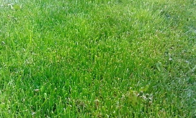 Jak vyčistit skvrny od trávy a špenátu?