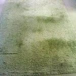 Jak vyčistit koberec domácími prostředky?