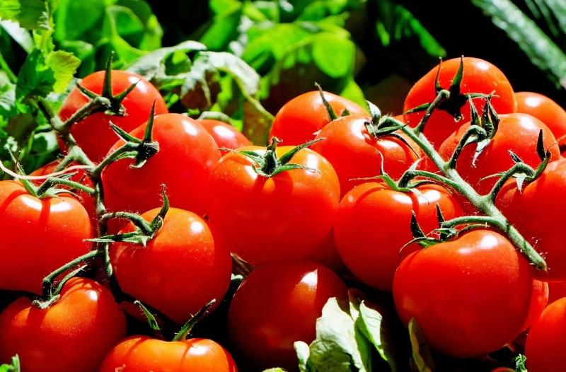 Jak vyčistit skvrny od rajčat?