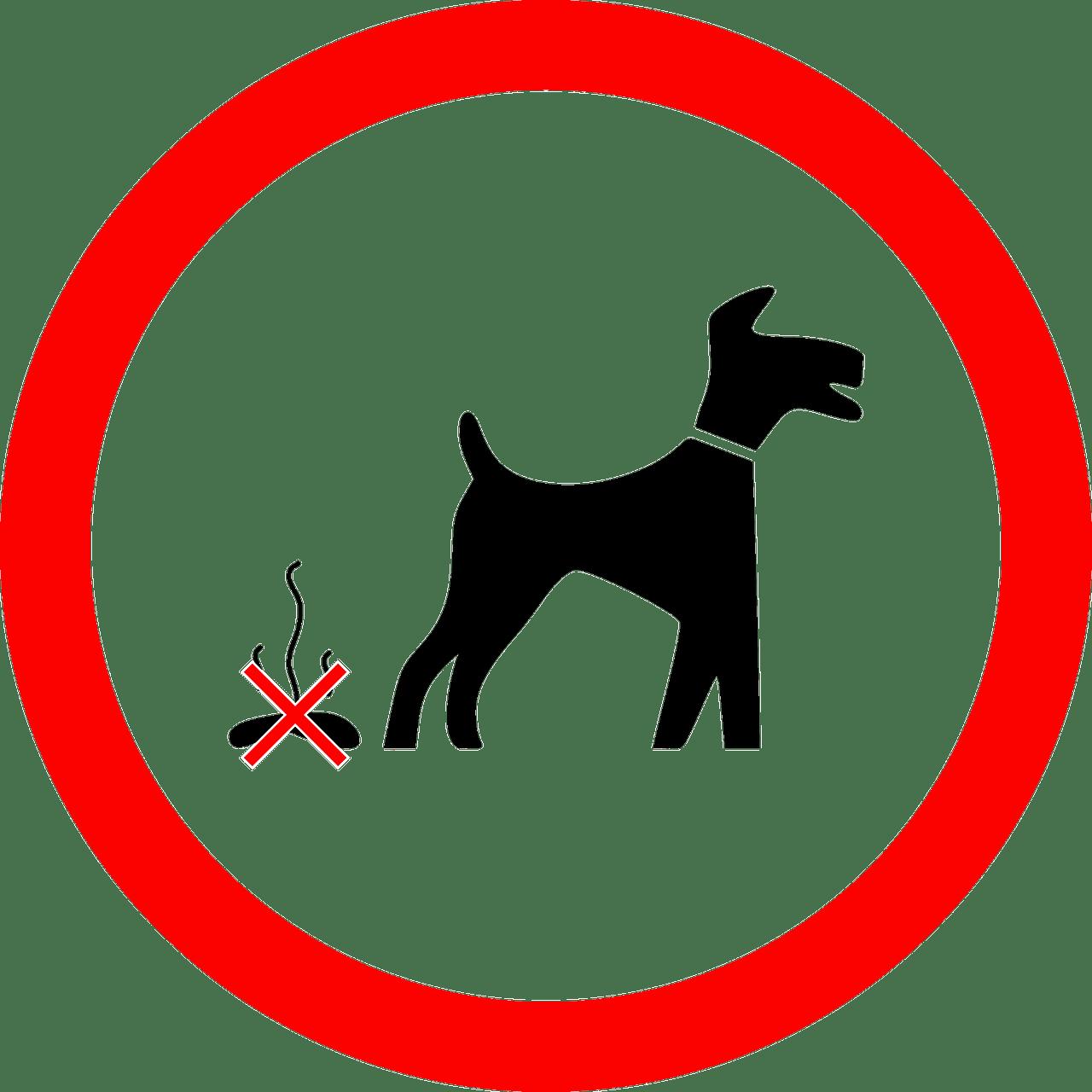 Jak odstranit zvířecí nečistoty z koberce?